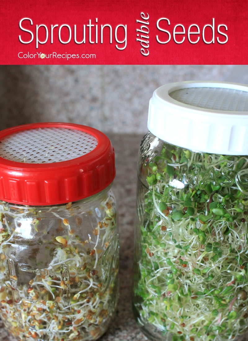 Sprouting Edible Seeds (7) ~ Color Your Recipes