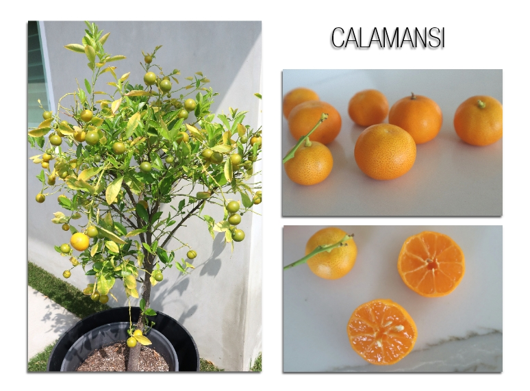 Asian Inspired Calamansi Souffle Cake Color Your Recipes